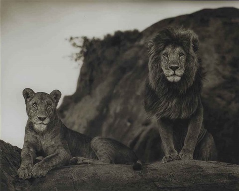 lion couple serengeti by nick brandt