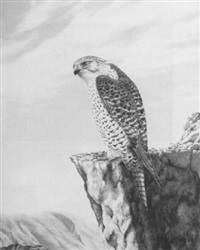 gyr falcon by geoffrey campbell-black