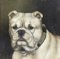 a portrait of a bulldog by edward aistrop