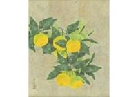 mandarin orange by kayo yamaguchi