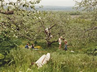 orchard by justine kurland