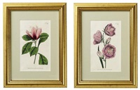 flowers (+ 11 others; 12 works) by william curtis