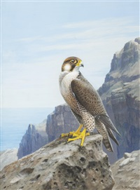cape verde islands peregrine by david morrison reid henry