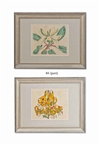 flowers from curtis botanical magazine (9 works) by walter hood fitch