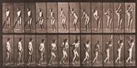 animal locomotion, pl. 291 by eadweard muybridge