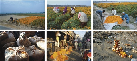 have you seen the flowers on the river set of 6 works by ravi agarwal