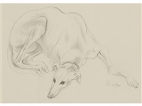 a study of a whippet resting by cecil beaton