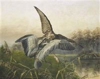 hawk attacking a heron by johannes gerardus keulemans