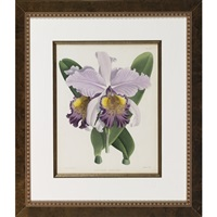 studies of orchids: anguloa ruckeri (+ 2 others; 3 works) by walter hood fitch