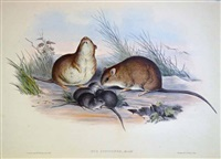 3 original hand coloured lithographs - 63 by john gould