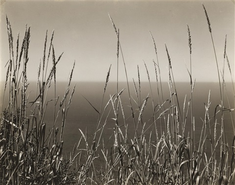 grass against sea big sur by edward weston