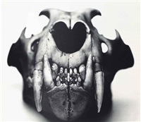lion (front view), prague by irving penn