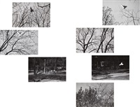 selected images (7 works) by harry callahan