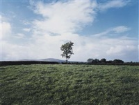 union jack flag in tree, country tyrone by paul graham