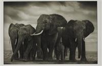 elephants five, amboseli by nick brandt