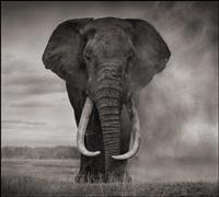elephant in dust, amboseli by nick brandt