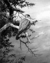 study of a falcon by david morrison reid henry