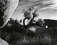 tree and boulder by brett weston