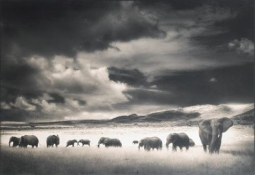 elephant herd, serengeti by nick brandt