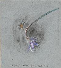 wild scabious by john ruskin