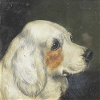 portrait of a clumber spaniel by edward aistrop