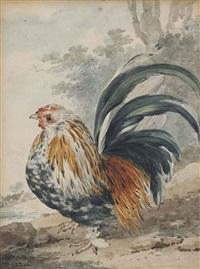 a dwarf rooster ( gallus nana) by aert schouman