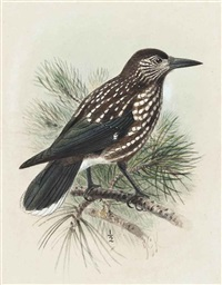 nutcracker by johannes gerardus keulemans
