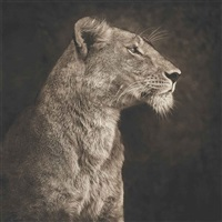 lioness against the rock by nick brandt