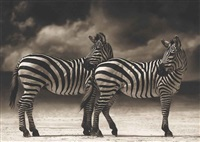 zebras turning heads, ngorongoro crater by nick brandt