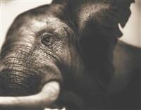bull, elephant eye by nick brandt