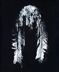 snowy owl 7 by david noonan