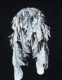 snowy owl 6 by david noonan