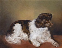 a liver and white spaniel by ferdinand mallitsch