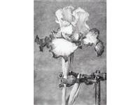 iris ii by william kentridge