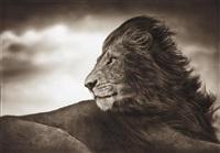lion before storm, close up, maasai mara by nick brandt