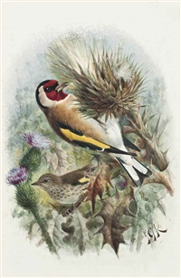 goldfinches by johannes gerardus keulemans