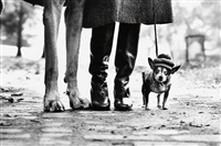 new york city (dog legs) by elliott erwitt