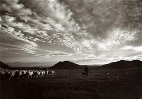 sheep near huesca spain by evelyn hofer