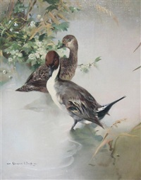 pin tails in may by vernon ward