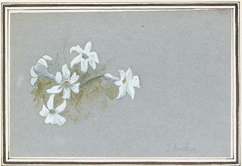 edelweis by john ruskin