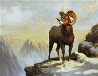 big horn sheep by joe abbrescia