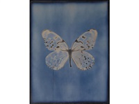 butterfly (from my ghost series) by adam fuss