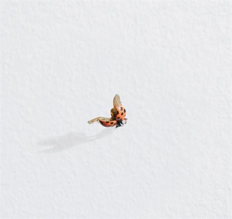 untitled ladybug by tom friedman