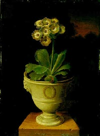 study of an auricula by james (sillet) sillett