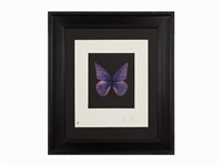 butterfly etching (renewal) by damien hirst