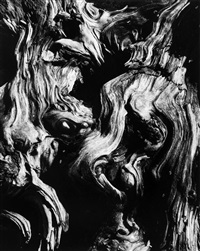 untitled (tree bark abstraction) by brett weston