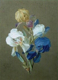irises by johann samuel arnhold
