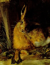hase by rudolf wimmer