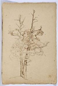 portrait d'arbre by théodore claude félix caruelle d' aligny
