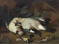 a still life of dead birds by melchior de hondecoeter